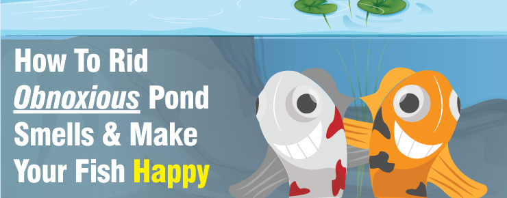 How To Ride Obnoxious Pond Smells & Make Your Fish Happy