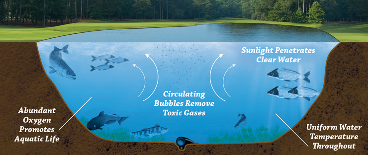 Eco-Logic Pond and Lake Ozone Aeration Promotes a Positive Ecological Balance in Water