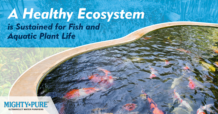 Mighty Pure UV Water Disinfection for Ponds, Aquariums, and Water Gardens