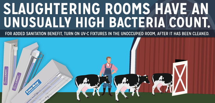 Slaughtering Rooms Have An Unusually High Bacteria Count